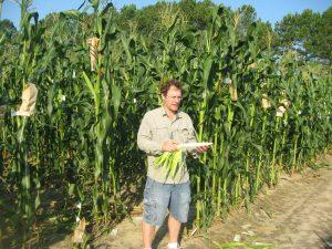Jim selecting trying to adapt Maiz Ancho to North Carolina